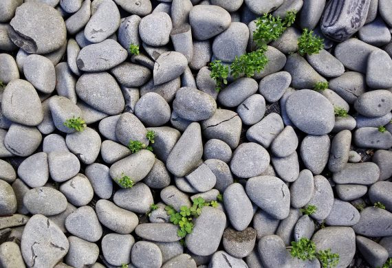 Pebbles metaphor for corona